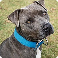Adopt A Pet :: Tank - Durham, NC