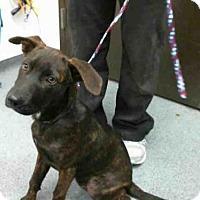 Adopt A Pet :: SUZIE - Tulsa, OK