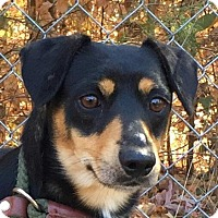 Adopt A Pet :: Toby - Harrisonburg, VA