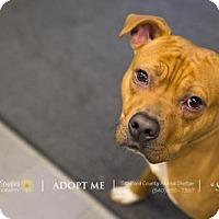 Adopt A Pet :: Stafford Shelter #72208 Spiral - Fredericksburg, VA