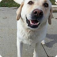 Adopt A Pet :: Aspen - Shinnston, WV