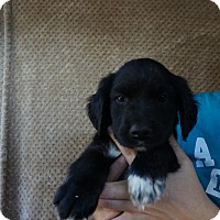 Adopt A Pet :: Keno - Oviedo, FL