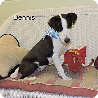 Terrier (Unknown Type, Medium) Mix Puppy for adoption in Slidell, Louisiana - Dennis