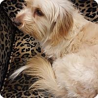 Adopt A Pet :: Abby - Valencia, CA