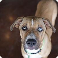 Adopt A Pet :: Bowie - San Antonio, TX