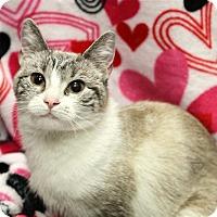 Adopt A Pet :: Lilianna - Fairfax Station, VA