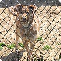 Adopt A Pet :: Sage - Linden, TN