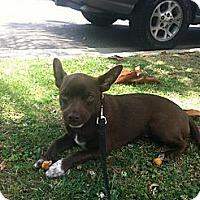 Adopt A Pet :: Alibi - Santa Monica, CA