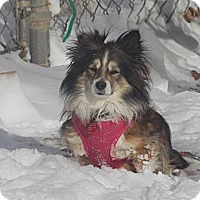 Adopt A Pet :: JASPER - Hesperus, CO