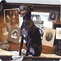 Adopt A Pet :: Spike - OC - San Diego, CA