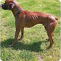 Adopt A Pet :: Brutus - Okatie, SC