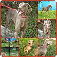 Adopt A Pet :: REIGN - Davenport, FL