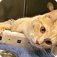 Adopt A Pet :: Apollo (4 paw de-claw) - Toledo, OH