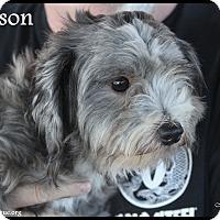 Adopt A Pet :: Jackson - Rockwall, TX