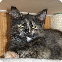 Adopt A Pet :: Giada - Portland, OR
