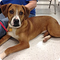 Adopt A Pet :: Gideon - Natchitoches, LA