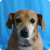 Adopt A Pet :: Bitsy - Kempner, TX