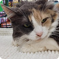 Adopt A Pet :: Juliette - Lakewood, CA