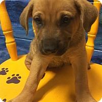 Adopt A Pet :: Fergie#5F - Orlando, FL