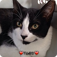 Adopt A Pet :: FIGARO - Great Neck, NY