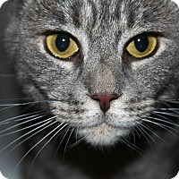 Adopt A Pet :: Diana - North Branford, CT