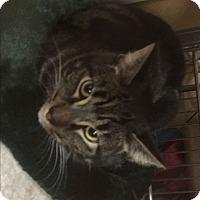 Adopt A Pet :: Walter - Riverside, CA