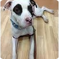 Adopt A Pet :: Bandit - Manhattan, NY