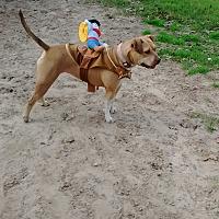 Adopt A Pet :: Abbra - Somerville, TX