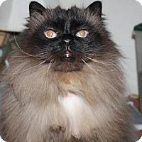 Adopt A Pet :: Rosa - Davis, CA