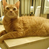 Adopt A Pet :: Friendly Fred - Reston, VA