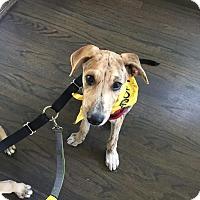 Adopt A Pet :: Peta - San Diego, CA