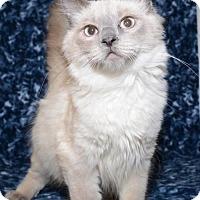 Adopt A Pet :: Sleepy - Salt Lake City, UT