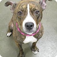 Adopt A Pet :: Hazel - Colfax, IL