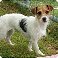 Adopt A Pet :: FANNIE FOXE - Phoenix, AZ