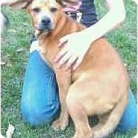 Adopt A Pet :: Otis - in New England! - kennebunkport, ME