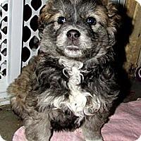 Adopt A Pet :: Merry - Saskatoon, SK