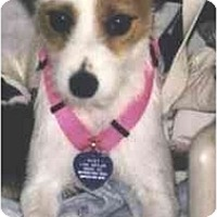 Adopt A Pet :: Suzy - Scottsdale, AZ