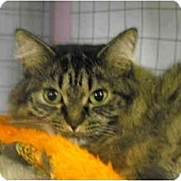 Adopt A Pet :: Momma Nell - Mission, BC