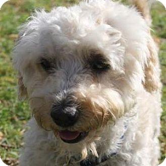 Furkids Small Dog Rescue