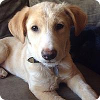 Adopt A Pet :: Yaya - Knoxville, TN