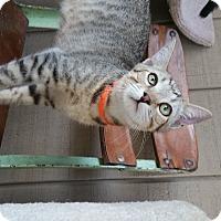 Adopt A Pet :: Milton - Madera, CA