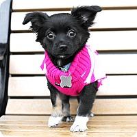 Adopt A Pet :: Kaluha-Adopted! - Detroit, MI
