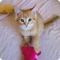 Adopt A Pet :: Mr. Orange - Mission Viejo, CA