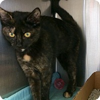 Adopt A Pet :: Maggie - East Brunswick, NJ