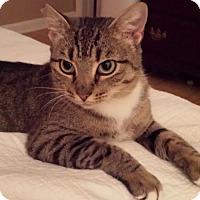 Adopt A Pet :: Lily Mae - Orlando, FL