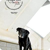 Adopt A Pet :: Rufio - Enfield, CT