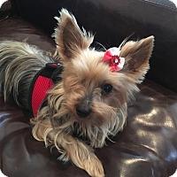 Adopt A Pet :: Zoey - Los Angeles, CA