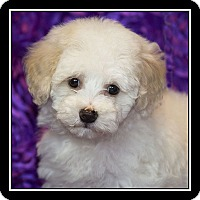 Adopt A Pet :: Chantilly - San Dimas, CA