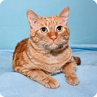 Adopt A Pet :: Leo - Tucson, AZ