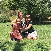 Adopt A Pet :: Bella is very sweet! - Redondo Beach, CA